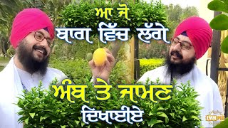 Lets Show the Mangoes and Berries In the Garden | Dhadrian Wale