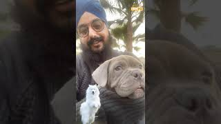 Everyone should try and raise a dog in their Household | DhadrianWale